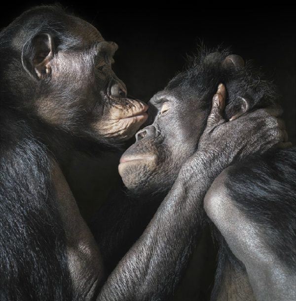 animal-photography-tim-flach-5