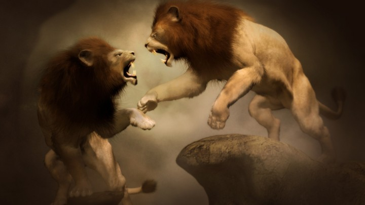 lion-fight-wallpaper